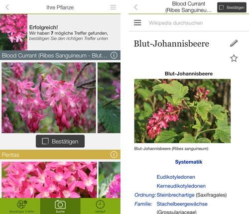 Funktioniert Gut Pflanzen Und Schmetterlinge Per App Erkennen