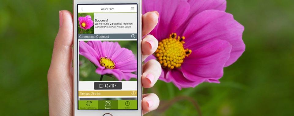 funktioniert gut pflanzen und schmetterlinge per app erkennen iphone. Black Bedroom Furniture Sets. Home Design Ideas
