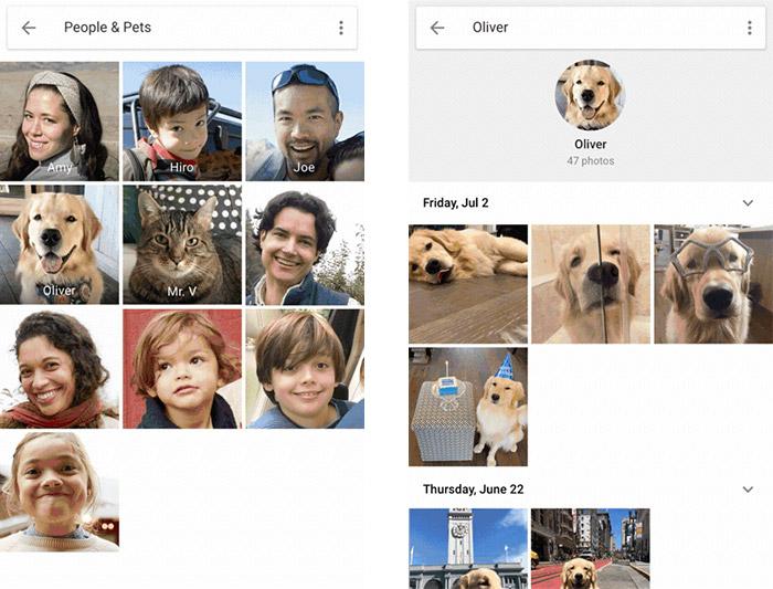 Google Fotos Haustiere