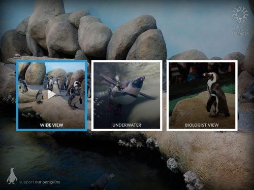 Pinguine Kameras